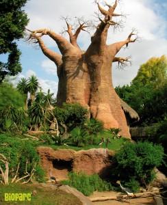 Réplica de baobab en el Bioparc de Fuengirola