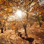 Bosque de cobre