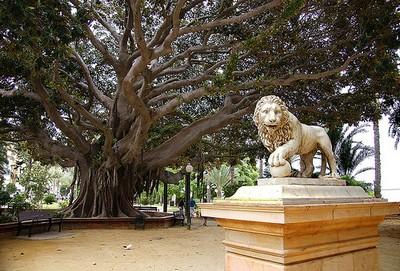 Un parque habitado por ficus centenarios, en Alicante